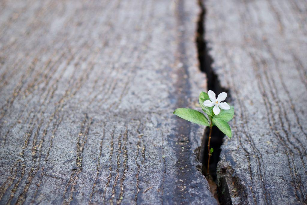 Eine Blume bricht durch den Asphalt