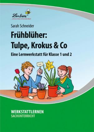 Frühblüher: Tulpe, Krokus & Co