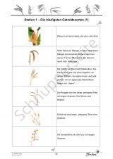 Dinkel, Weizen & Co: Das Getreide PR