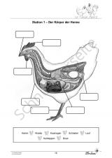 Das Huhn PR