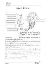 Das Eichhörnchen Set