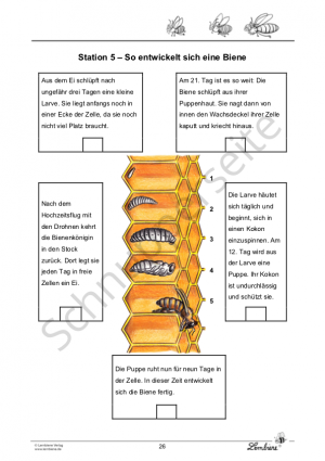Die Biene DLSL