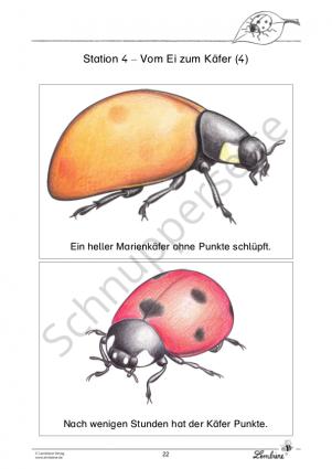 Der Marienkäfer PR