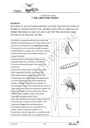 Die Insekten Set