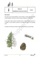 Der Wald PR