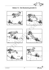 Die Ente – einem Wasservogel auf der Spur PR