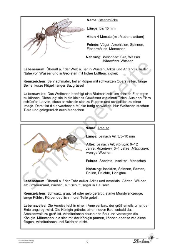 die insekten  lernbiene verlag