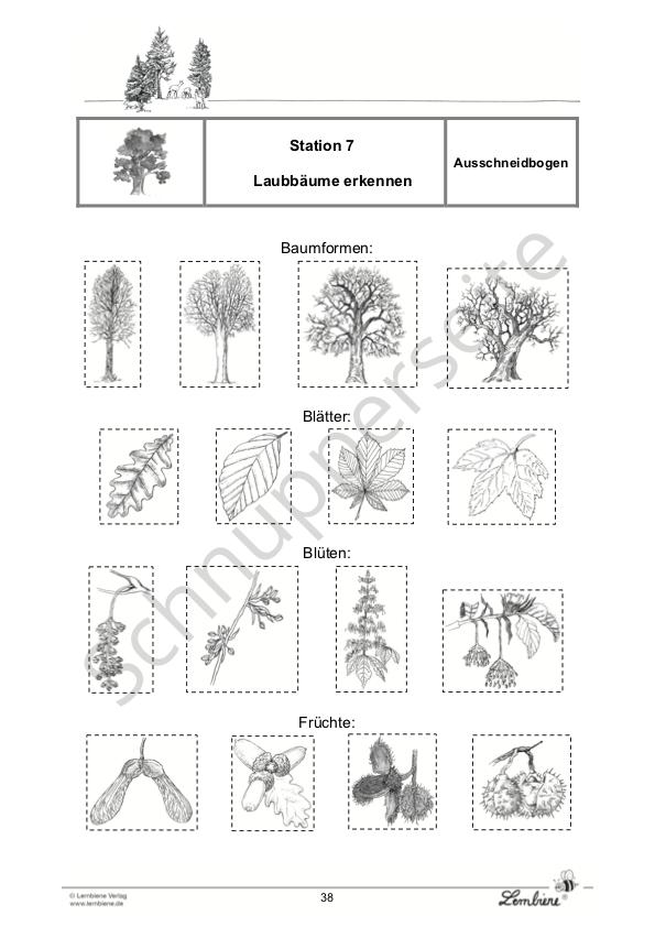 Der Wald Lernbiene